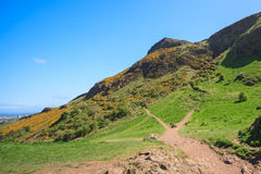 Góra paśniki z niebieskimi niebami Zdjęcie Royalty Free