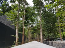 Góra po drzewa Fotografia Stock