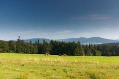 góra polerujący lato obraz stock