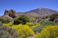 Góra przy Wyspa Kanaryjska Teide Obraz Royalty Free