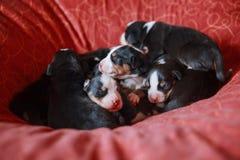 Góra psi szczeniaki w łóżku zdjęcia stock
