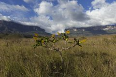 Góra Roraima Tepui i Kukenan obrazy stock
