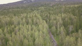 góra TARGET1716_0_ ślad klamerka Odgórny widok lasowy ślad w górach Panorama las w górach w chmurnym zdjęcie wideo