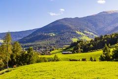 Góra z łąką w południowym Tyrol obraz royalty free