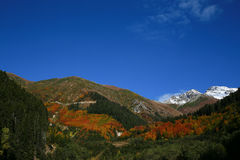 Góra z śniegiem w jesień krajobrazie z kolorowym lasem Zdjęcia Stock
