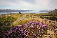 Góra z dzikimi kwiatami Zdjęcie Royalty Free