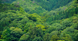 Góra zielony drzewny las zgłębia dżunglę Zdjęcia Royalty Free