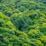 Góra zielony drzewny las zgłębia dżunglę Obraz Stock