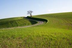 górkowaty krajobraz Zdjęcia Royalty Free