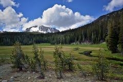Górna łąka, Lassen Powulkaniczny park narodowy Zdjęcia Stock
