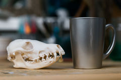 Górna szczęka czaszka lisa lying on the beach na drewnianym stole Barwiona farba plami akrylowego i akwarele, miejsce pracy artys Fotografia Royalty Free