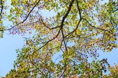 Górne gałąź drzewa tło Obrazy Stock