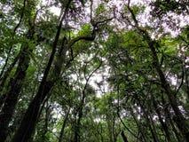 Górne gałąź drzewa w lesie Obrazy Stock