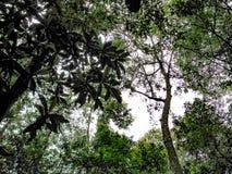 Górne gałąź drzewa w lesie Zdjęcie Stock