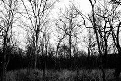 Górne gałąź nieżywy drzewo z przeciw lasowi Zdjęcia Stock