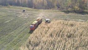Górnego widoku kukurydzany syndykat z ciężarową pracą przy kiszonki zbierać zbiory