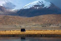 górska sceneria Obraz Royalty Free