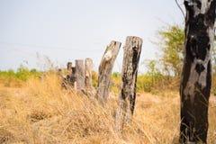 Górska sceneria w środkowym Wietnam z drewnianym ogrodzeniem robić nieboszczyk, podpalał drzewa i żółtego trawy pola, zdjęcie stock