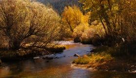 górski strumień Obraz Royalty Free