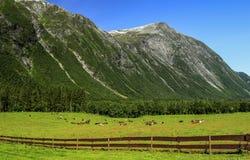 Góry Obraz Royalty Free