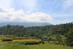 Góry Agung wulkan Bali 01 Obraz Stock