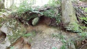 Góry Amiata roślinność kołysa i zakorzenia Obraz Stock