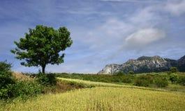 góry drzewne Fotografia Royalty Free