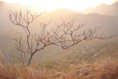 góry drzewo jeden Obraz Stock
