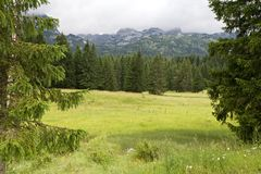 Góry i świerczyny zbliżają Czarnego jezioro w Montenegro Fotografia Stock
