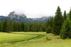Góry i świerczyny zbliżają Czarnego jezioro w Montenegro Zdjęcie Stock