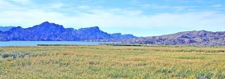 Góry I bagno Obok Kolorado rzeki zdjęcie royalty free