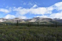 Góry i drzewo krajobraz Zdjęcia Royalty Free
