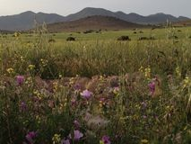 Góry i natura Fotografia Stock