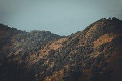 Góry i natura W wieczór koloru Złotych lasowych lasach w Południowa Azja Obraz Royalty Free