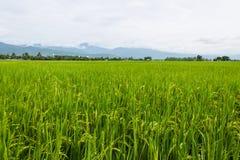 Góry i zieleń ryż pole w Tajlandia Fotografia Royalty Free