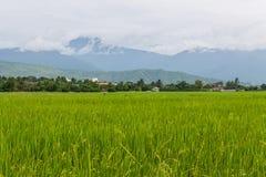 Góry i zieleń ryż pole w Tajlandia Fotografia Stock