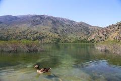 Góry jezioro na wyspie Crete i kaczka w przedpolu, Grecja obraz royalty free