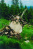 Góry Kamienny drzewo Obrazy Stock