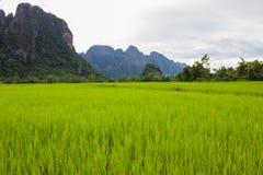 Góry kształtują teren ryżową naturę zdjęcia stock