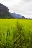 Góry kształtują teren ryżową naturę zdjęcie royalty free