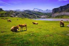 Góry kształtują teren z jeziorem i paśnikiem Zdjęcie Royalty Free