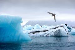 Góry lodowa w Jokulsarlon gleczeru lagunie Zdjęcie Stock