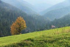 Góry Osamotniony żółty drzewo obrazy stock