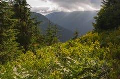 Góry perspektywiczne Obrazy Royalty Free