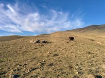 Góry pole Fotografia Royalty Free