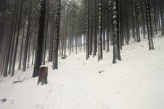 góry polerują zima Obraz Royalty Free