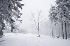 góry polerują zima Zdjęcia Stock