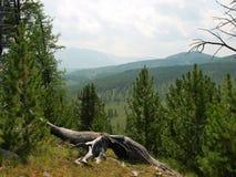 Góry, przepustka Ulagan Zdjęcia Stock