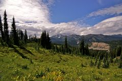 Góry Ranier park narodowy, stan washington Zdjęcia Stock