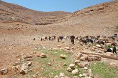 Góry Samaria Obrazy Stock